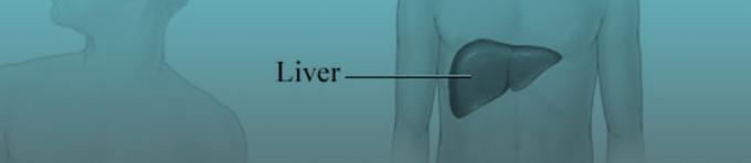 sevg-liver